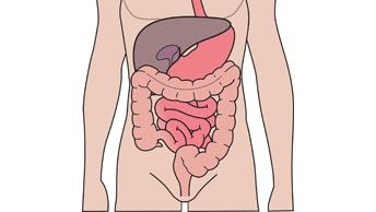 Understanding your digestive and urinary system
